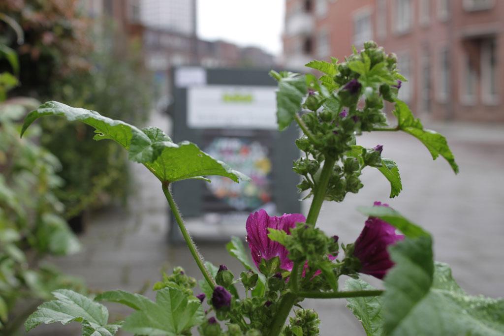 Verborgen tuinen rotterdam 2016 de tuin van rob en for De tuinen rotterdam